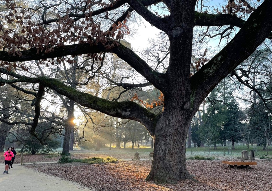 Runners dwarfed by the Tree of the Year in the frosty early morning light. Photo: Nicki Renfrey.